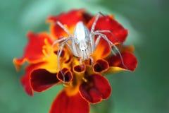 Insecto que se sienta en un cierre de la flor encima de la macro foto de archivo libre de regalías