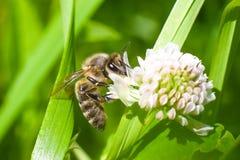 Insecto que se sienta en una flor Imágenes de archivo libres de regalías