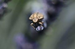 Insecto que viene en usted Imagen de archivo libre de regalías
