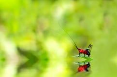 Insecto rojo en una hoja verde Fotos de archivo