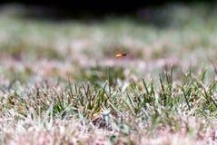 Insecto simultáneamente Foto de archivo libre de regalías