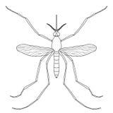 insecto un mosquito realista Pipiens del mosquito Foto de archivo libre de regalías