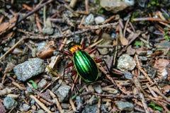 Insecto verde brillante imagen de archivo libre de regalías