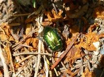 Insecto verde en la tierra Foto de archivo libre de regalías