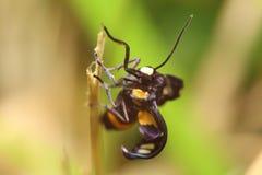 Insecto y flor Imágenes de archivo libres de regalías
