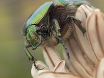 Insecto y lilly flor verdes Fotos de archivo