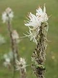 Insecto y lilly flor verdes Imágenes de archivo libres de regalías