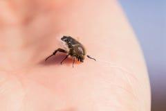 Insecto y mano Fotos de archivo