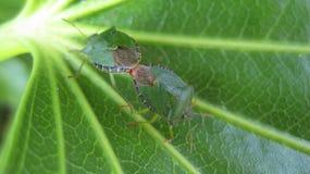 Insectos Imagen de archivo libre de regalías