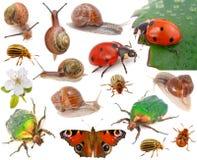 Insectos foto de archivo libre de regalías