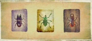 Insectos Imágenes de archivo libres de regalías