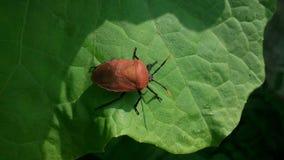 insectos Fotografía de archivo