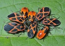 Insectos 1 Fotografía de archivo