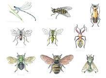 Insectos beneficiosos 2 del jardín Foto de archivo libre de regalías