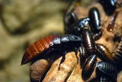 Insectos, cucarachas Imágenes de archivo libres de regalías