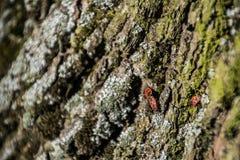 Insectos de acoplamiento imagen de archivo