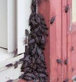 Insectos de la anciano de caja en casa Fotos de archivo libres de regalías