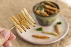 Insectos de la comida: El insecto de bamb? de Caterpillar del gusano de la tenencia de la mano de la mujer fri? curruscante para  fotos de archivo libres de regalías