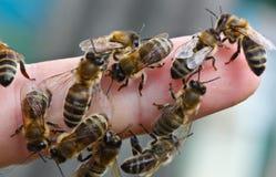 Insectos de la comunidad Foto de archivo