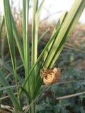 Insectos de la hierba Imagenes de archivo