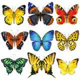 Insectos de la mariposa aislados Ilustración de la acuarela Fotografía de archivo