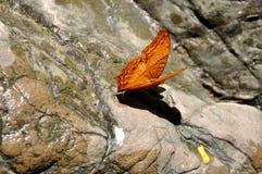 Insectos de la selva de Tailandia Imagen de archivo libre de regalías