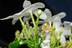 Insectos del predicador imagen de archivo libre de regalías
