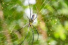 Insectos del tiroteo de cerca fotografía de archivo libre de regalías