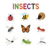 Insectos divertidos, sistema lindo del vector de los insectos de la historieta Mariposa y mariquita coloreadas de la abeja de los Imagen de archivo
