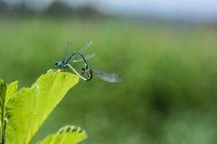 Insectos en el lago Foto de archivo libre de regalías
