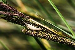 Insectos en el lago Fotos de archivo libres de regalías