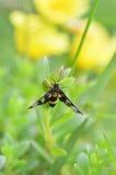 Insectos en hierba Fotos de archivo