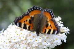 Insectos en las flores del verano Imagenes de archivo