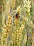 Insectos en las montañas de Cárpatos Fotos de archivo libres de regalías