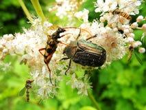 Insectos en una flor Imagenes de archivo