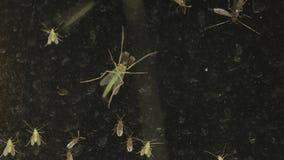 Insectos en una ventana almacen de metraje de vídeo