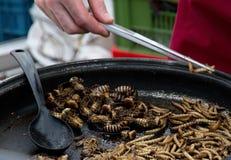 Insectos fritos en una cacerola Foto de archivo libre de regalías