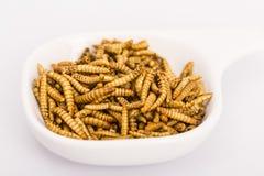 Insectos fritos, molitors fotos de archivo libres de regalías