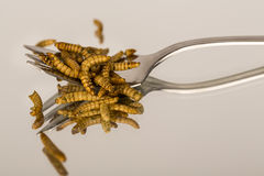 Insectos fritos, molitors Foto de archivo libre de regalías