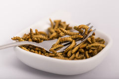 Insectos fritos, molitors Fotografía de archivo libre de regalías