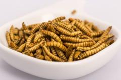 Insectos fritos, molitors Imagen de archivo libre de regalías