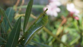 Insectos - fuerte de Kumbhalgarh Imagen de archivo