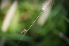 Insectos hermosos en un primer de la hoja Imagen de archivo libre de regalías