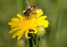 Insectos macros Imagen de archivo libre de regalías