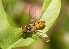 Insectos macros Imágenes de archivo libres de regalías