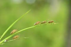 Insectos minúsculos Fotografía de archivo libre de regalías