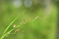 Insectos minúsculos Fotos de archivo