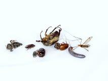 Insectos muertos Imagenes de archivo