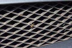 Insectos muertos pegados en la parrilla de radiador El frente de un vehículo de pasajeros con los insectos muertos machacados imágenes de archivo libres de regalías