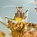 Insectos Stock Photo